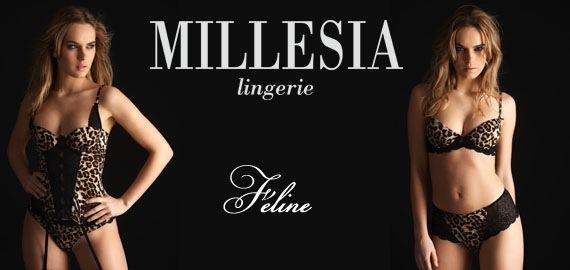 Millesia Féline